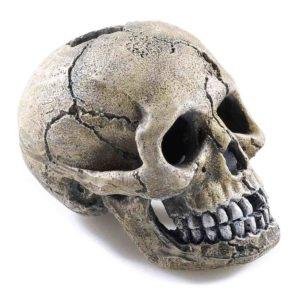 Classic Spooky Skull for aquatics tank